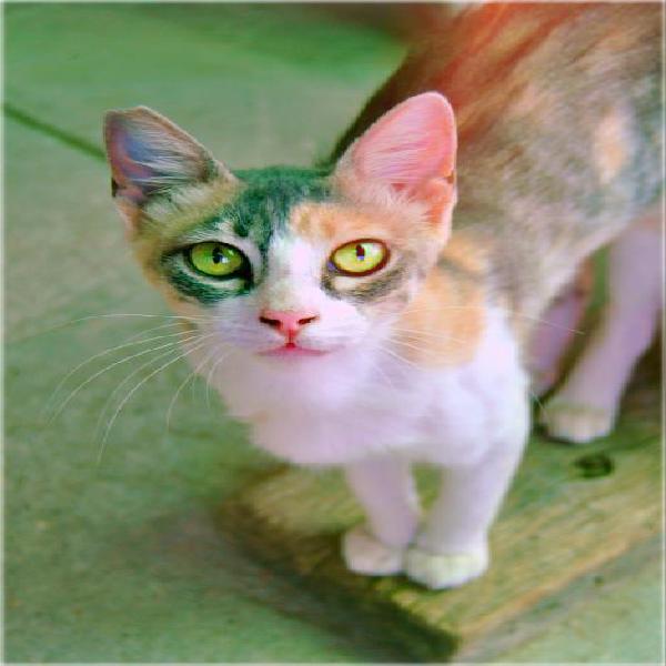 Violeta - gato en adopción