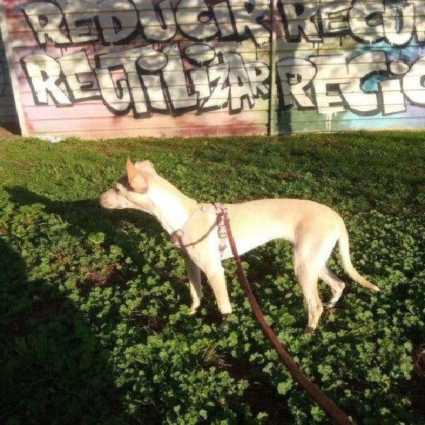 Cuidador de animales: perros, gatos, etc