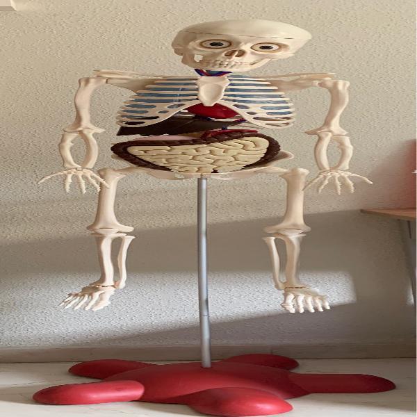 Esqueleto cuerpo humano national geographic