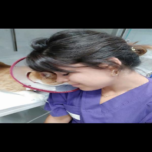 Cuidadora de gatos (veterinaria)
