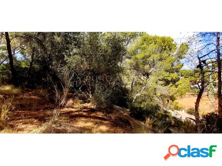 Parcela para un chalet unifamiliar en venta en Paguera, Calvia. Inmobiliaria Mallorca Puro Agents.