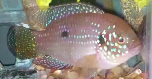 Adopto peces