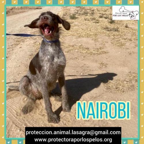 Nairobi - perro en adopción
