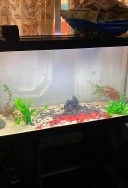 acuario pecera 200 l