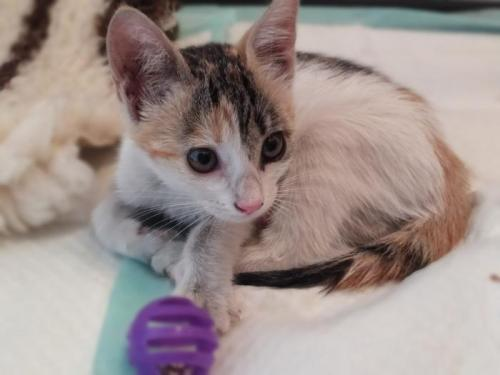 Hope - gato en adopción
