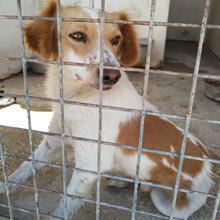 Nº 1783 - perro en adopción