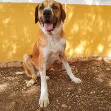 Nº 1784 - perro en adopción