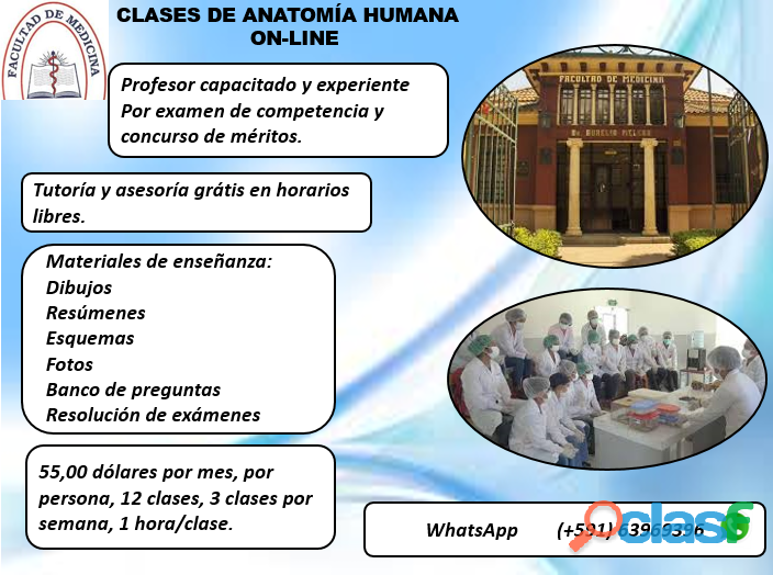 CLASES PARTICULARES DE ANATOMÍA HUMANA