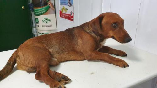 Hope - perro en adopción
