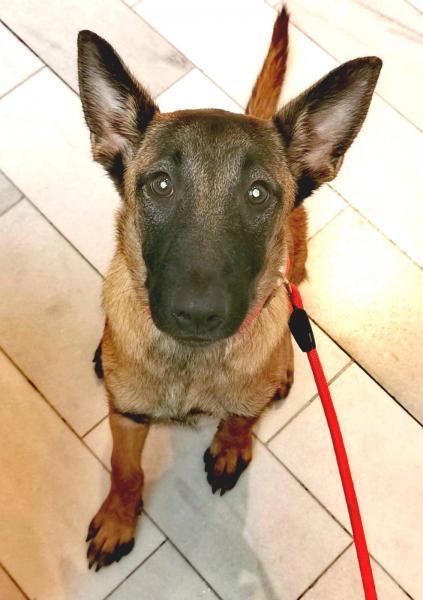 Hã¼ma - perro en adopción