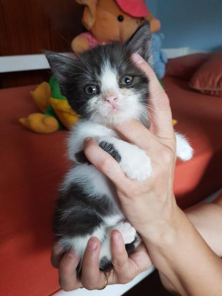 Homer - gato en adopción