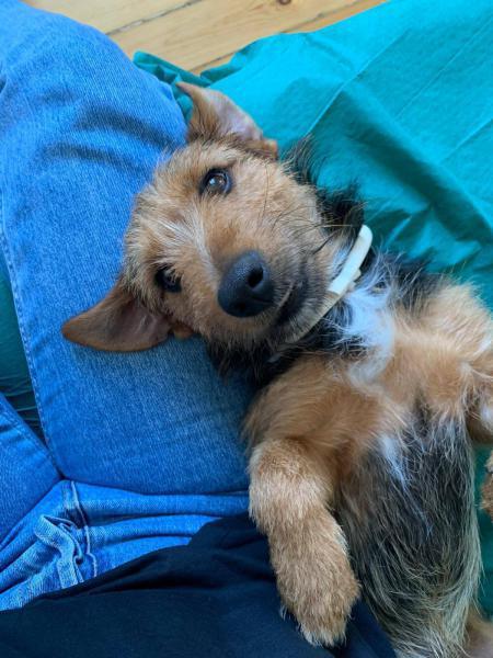 Lester - perro en adopción