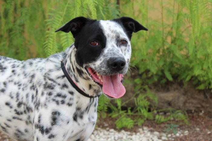 Pongo - perro en adopción