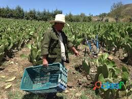 Se buscan jornaleros para procesos de seleccion en recoleccion de fruta, verdura y hortalizas