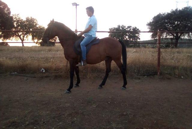 Venta de caballo noble en ciudad real