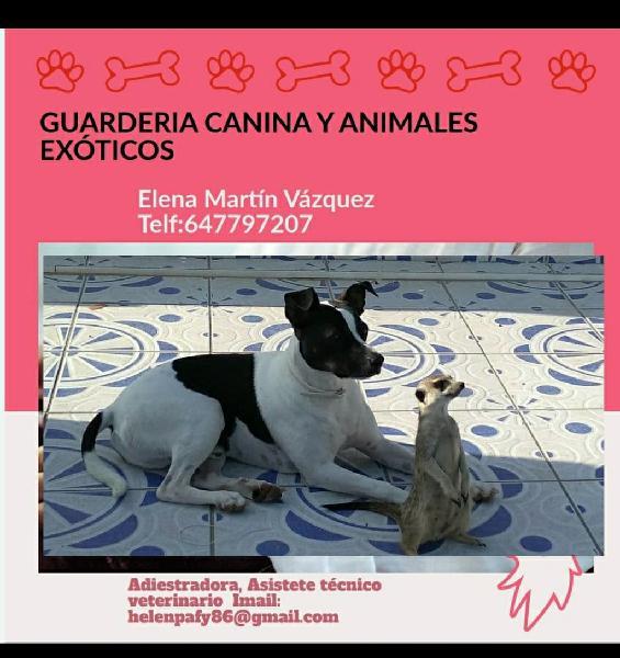 Cuidadora de perros y animales exóticos