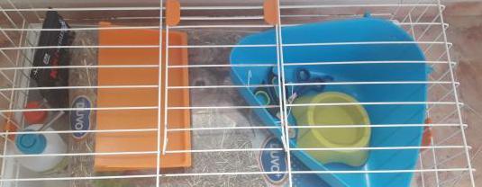 Accesorios y comida de conejos