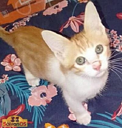 Kinder - gato en adopción