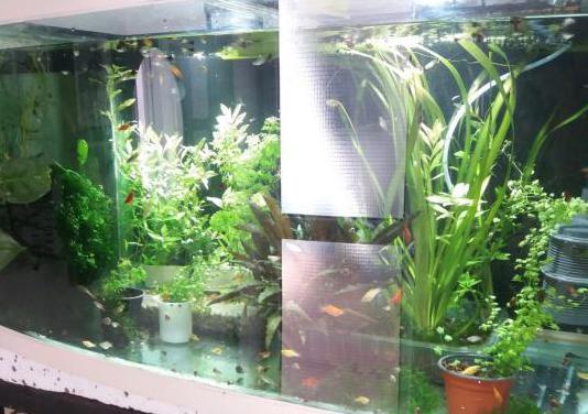 Acuario marino urna con rebosadero cristal panoram