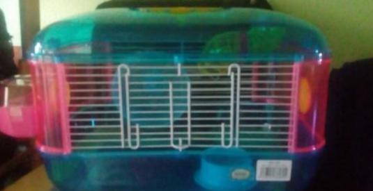 Jaula hámsters o roedores