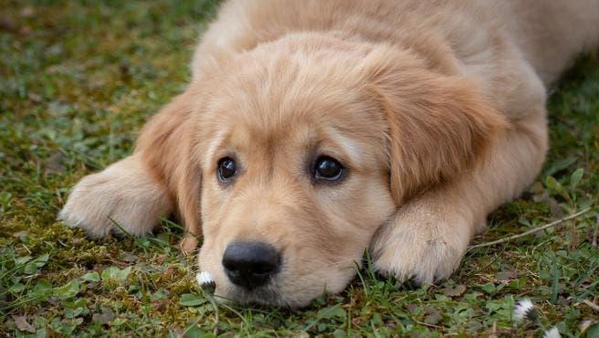 Paseo perros y cuido todo tipo de animales.