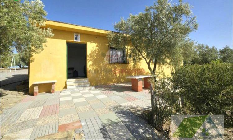 Venta de Finca de recreo con olivos marteños en Granada