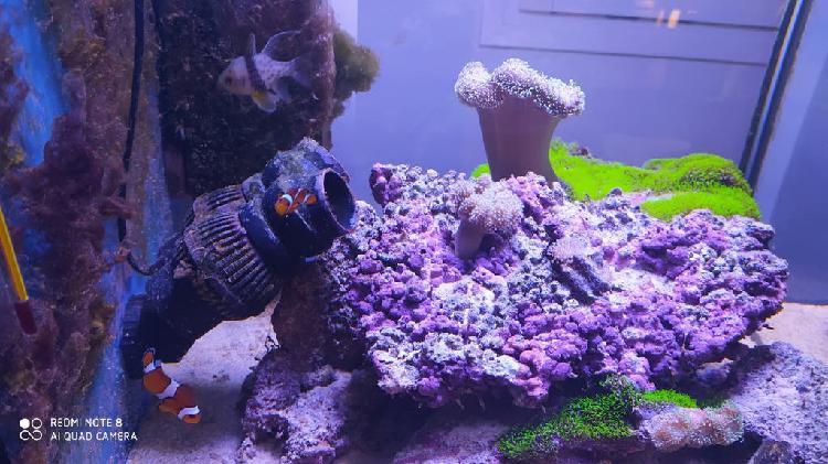 Vendo mi acuario cubo marino