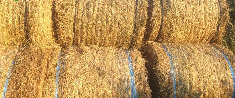Venta de alfalfa y ray grass en barcelona