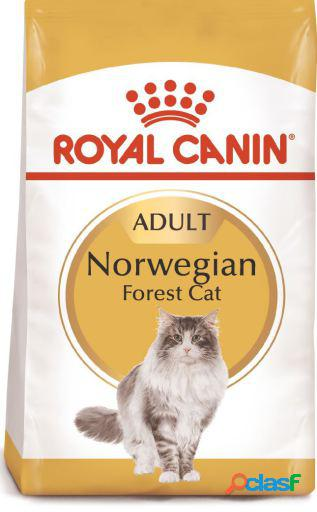 Royal canin norweigan forest cat 10 kg