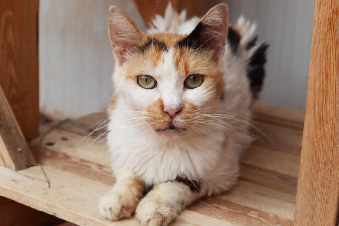 Mami - gato en adopción