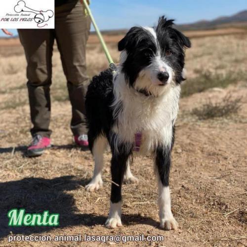 Menta - perro en adopción