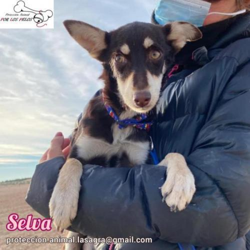 Selva - perro en adopción