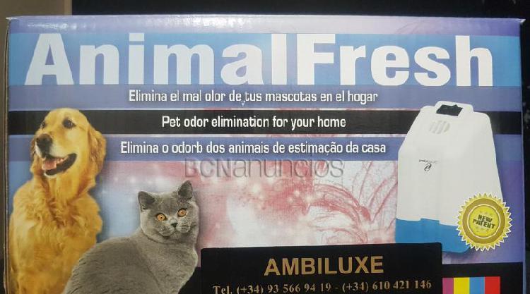 Eliminar olor de mascota