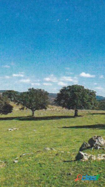 Finca rústica de 172 hectáreas Caceres/Trujillo 2