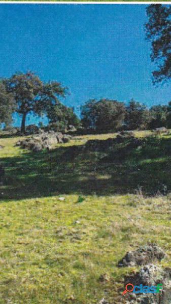 Finca rústica de 172 hectáreas Caceres/Trujillo 3