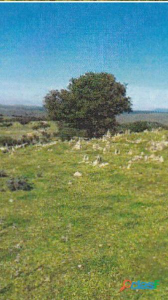 Finca rústica de 172 hectáreas Caceres/Trujillo 4