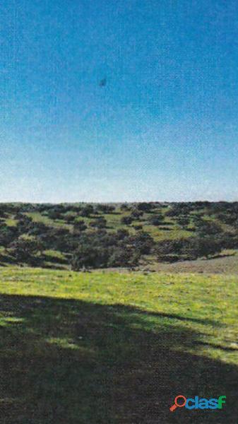 Finca rústica de 172 hectáreas Caceres/Trujillo 5