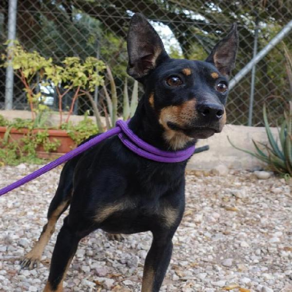 Baxter - perro en adopción