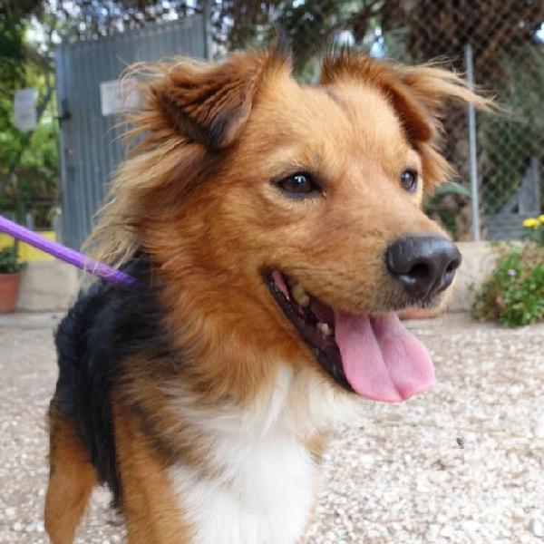 Darwin - perro en adopción