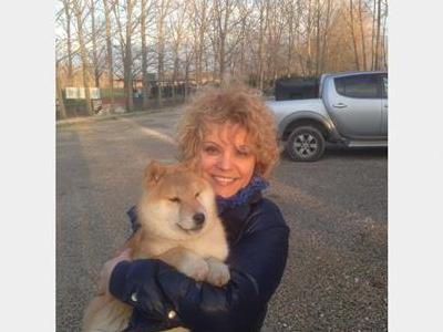 Hermosos cachorros shiba inu pedigree libres de en