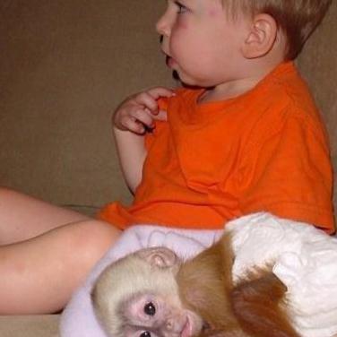 Lindos monos capuchinos