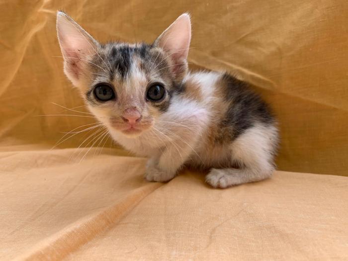 Rainbow - gato en adopción