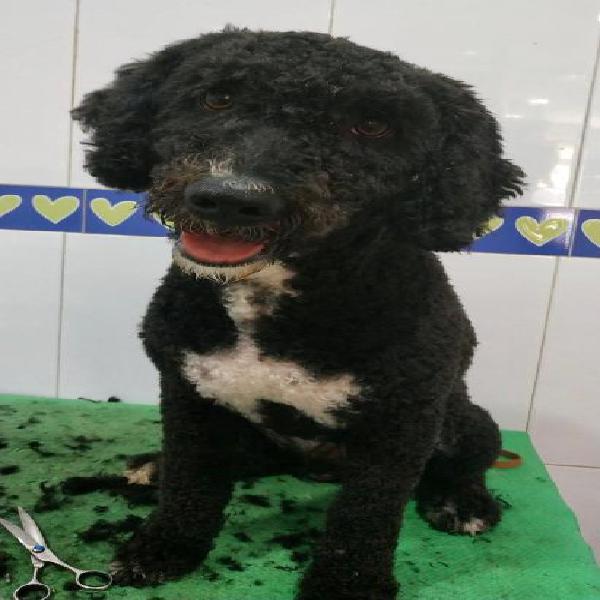Lucas - perro en adopción