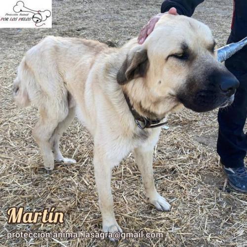 Martin - perro en adopción