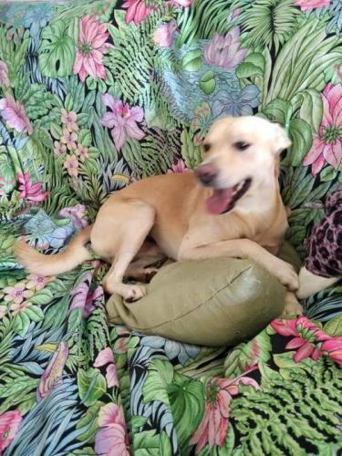 Milo - perro en adopción
