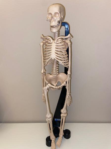 Esqueleto humano discovery channel
