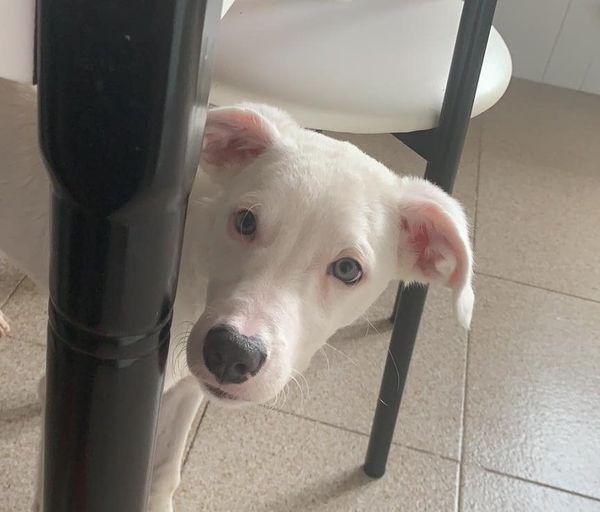 Zero - perro en adopción