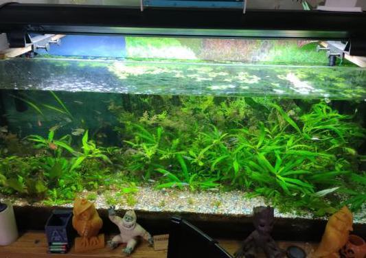 Acuario 240l filtro 1200l/h más peces