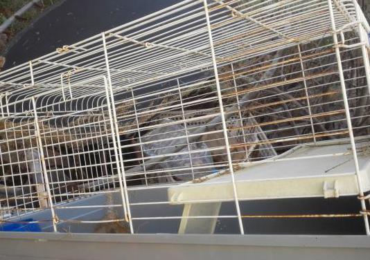 Jaula habitaculo para mascotas (roedores)