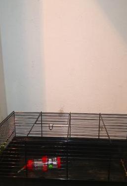 Jaulas para roedores pequeños